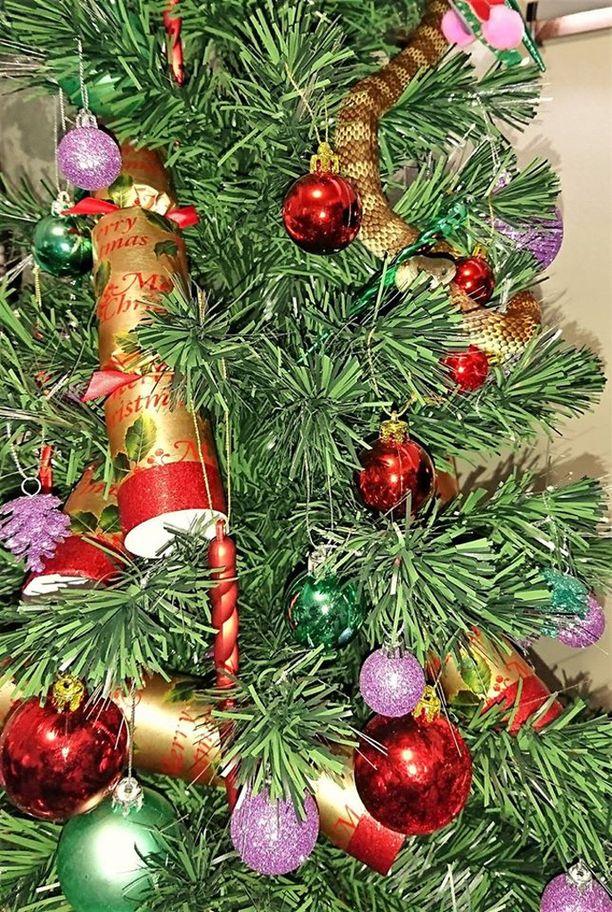 Tiikerikäärme sopi mukavasti joulukuusen värimaailmaan.
