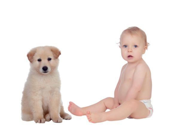 Keskustelupalstoilla moni on irvaillut, että suomalaiset ottavat mieluummin koiranpennun kuin hankkivat vauvan. Tuoreen uutisen mukaan se voi hyvinkin pitää paikkaansa.