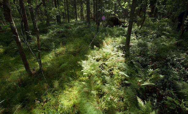 Ympäristörikosten määrä on kasvanut vuodesta 2016.
