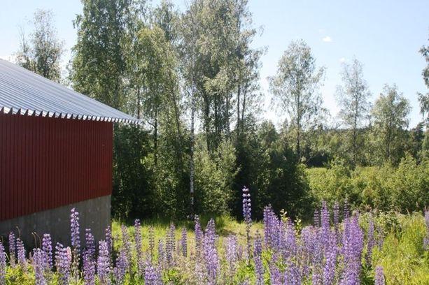 Kahdeksan hehtaarin maatila Karkkilassa oli seitsemänneksi katsotuin kohde. Tilalla sijaitsee muun muassa 221-neliöinen hevostalli. Kokonaisuuteen kuuluu sekä laidunta, metsää että pihapiiriä.