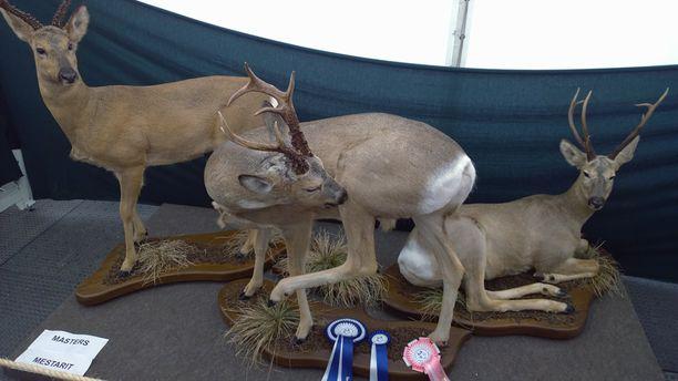 Liettuan Kestutis Bybartasin siperialainen metsäkaurisryhmä toi voiton nisäkässarjassa.