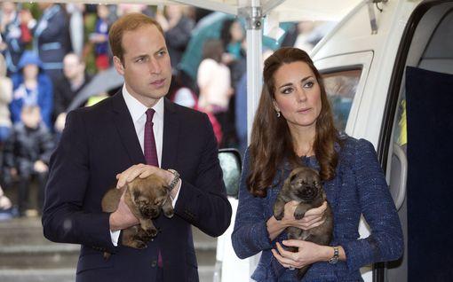 Prinssi Williamin perhe kasvoi: James Middleton lahjoitti koiranpennun