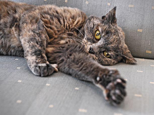 Halosen Rontti-kissa ennen kuolemaansa vuonna 2012.