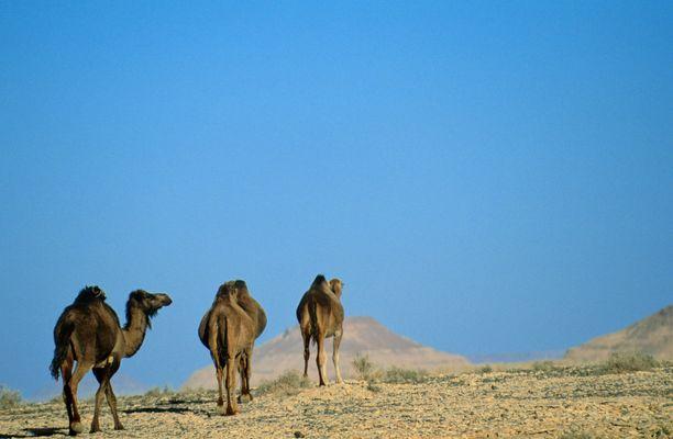Libyan aavikoille matkustaminen on tällä hetkellä melkoisen riskialtista.