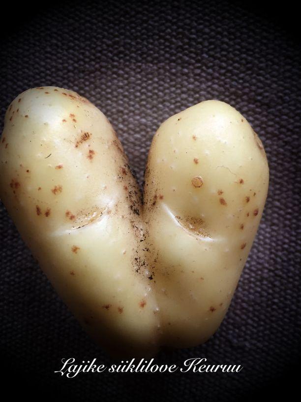Perunamaalta löytynyt yksilö muistuttaa sydäntä tai suutelua.
