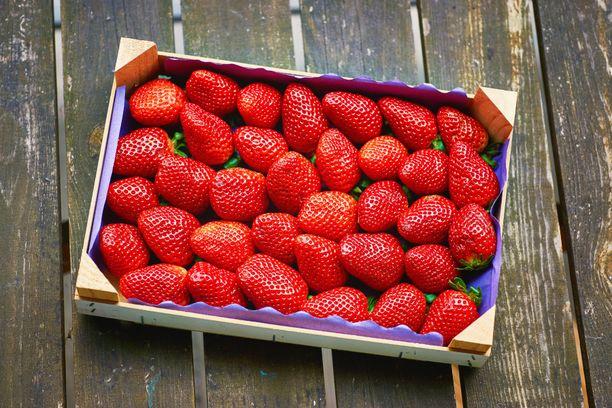 Mansikkasesonki on parhaimmillaan heinäkuussa. Laadukasta mansikkaa tullaan saamaan vielä elokuun lopulle asti.