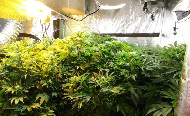 Asunnosta löytyi huumausainekasvien kasvattamiseen soveltuvaa välineistöä. Arkistokuva ei liity tapaukseen.