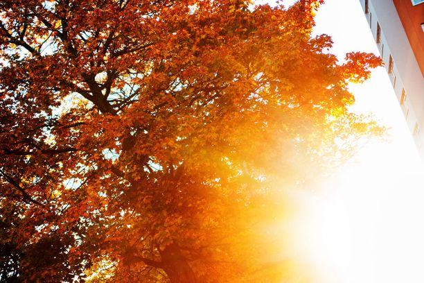 Ensi viikolla voidaan mitata jopa +20 asteen lukemia auringon paistaessa.
