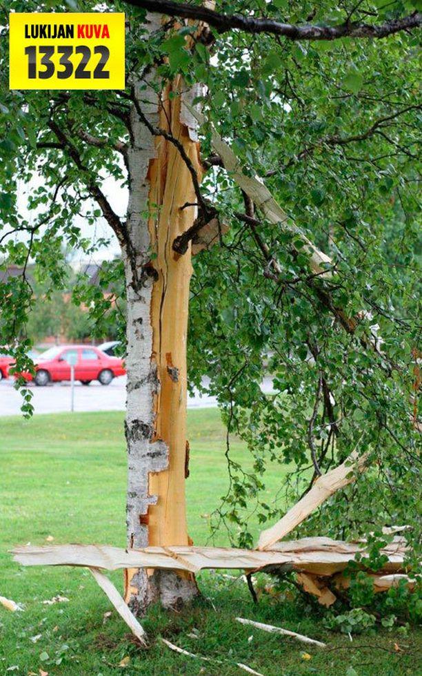 Ukkosella puun alla oleskelu on erittäin vaarallista.