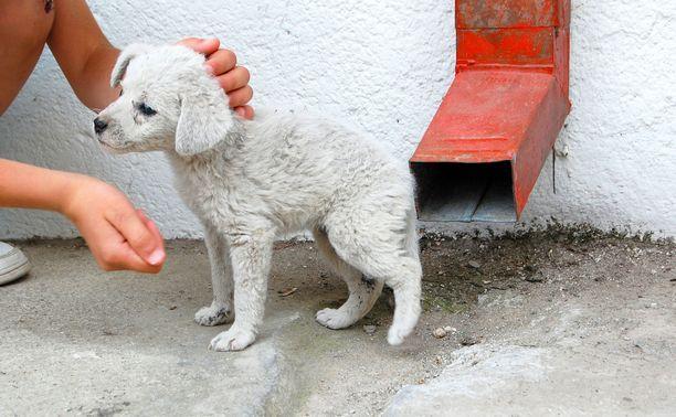 Rabies ei välttämättä näy koirasta ulospäin.