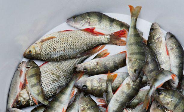 Kalan tuoreuden voi kohta tarkistaa älypyhelimen sovelluksen avulla.