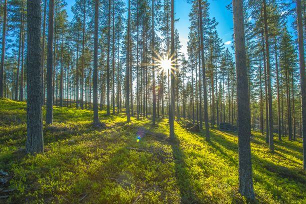 Jos metsään haluat mennä, niin mene tänään tai huomenna.