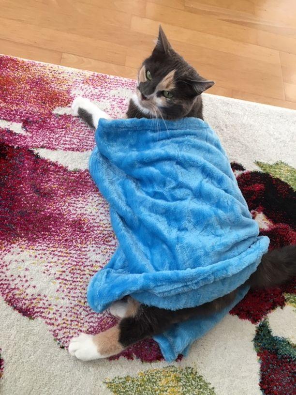 Maaritin kissa sai pikkupeitoista itselleen pehmustetta.