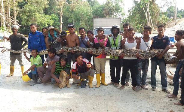 Käärme löydettiin siltatyömaalla Penangin turistisaarelta.