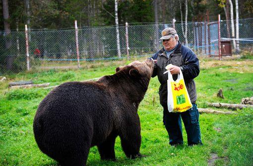 Hunaja on karhujen suurinta herkkua.