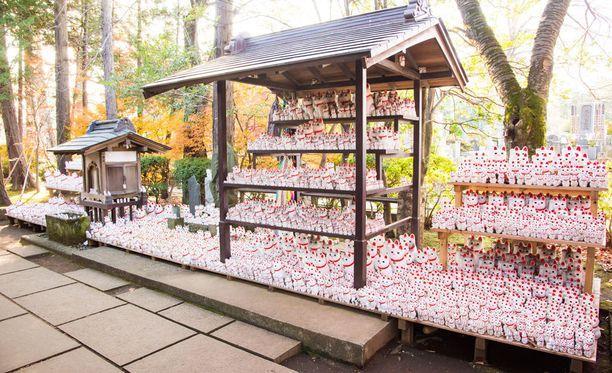 Kissoja tuodaan temppeliin kiitoksen osoitukseksi.