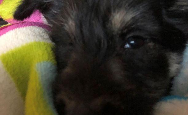 Mia Jussinniemen koiranpentu jouduttiin lopettamaan vain pari päivää sen jälkeen, kun se oli tullut Suomeen.
