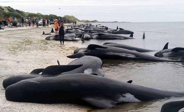 Valaita rantautui yhteensä 416.