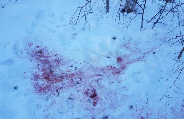 Veriset jäljet jäivät lumihankeen.