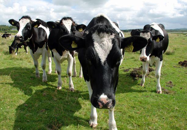 Alkuvuonna erityisesti maitotuotteiden hinnat nousivat voimakkaasti. Kuvituskuva.
