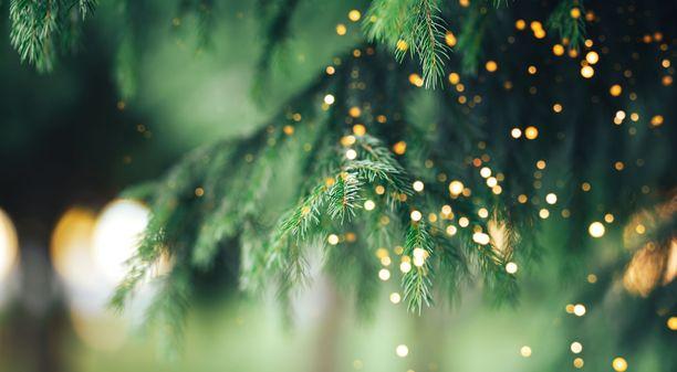 Joulukuusi on vuosien saatossa toiminut lukuisien kappaleiden sanoitusten kohteena.