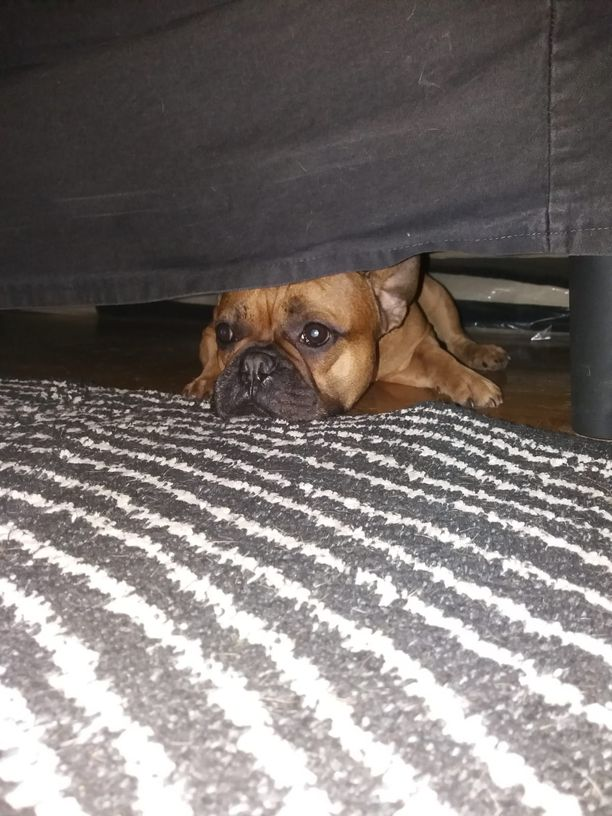 Upi hakeutui sohvan alle suremaan koirakaverin menettämistä.
