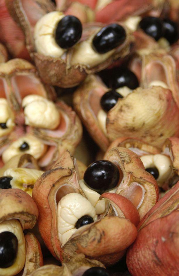 Ackee-hedelmä on Jamaikan kansallisherkku.