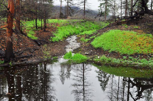 Kesällä maasto on vehreää.