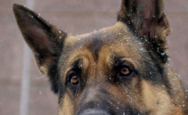 Irtokoira puri asiakasta ja poliisia K-marketissa. Koira jouduttiin lopettamaan. Kuvan koira ei liity tapaukseen.