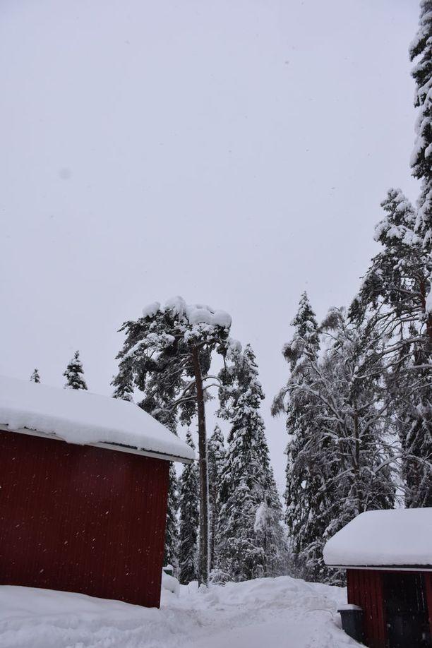 Lunta on satanut Kainuussa runsaasti.