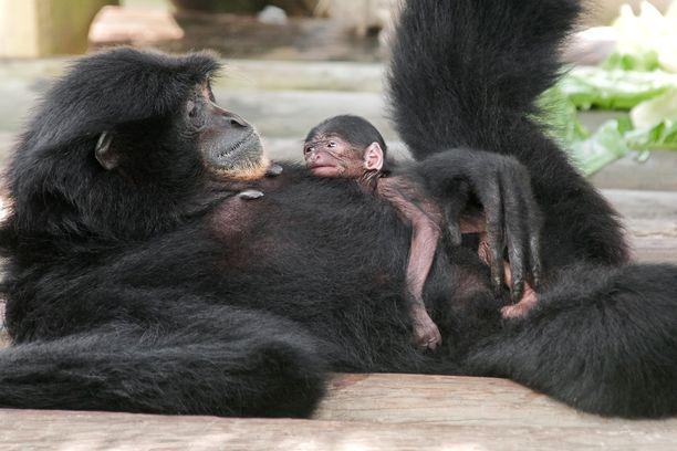 Emo pitää pienokaisestaan huolta.