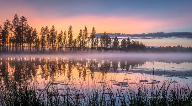 Sumu leijailee järvellä Lieksassa.