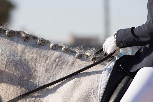 Hevosurheilun kyselyyn ottivat osaa niin ratsu- kuin ravipuolen toimijat. Kuvituskuva.
