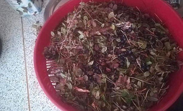Myyjä on myynyt marjoja ämpäreissä, joissa on mustikkakerroksen alla ollut käpyjä, risuja ja roskaa.