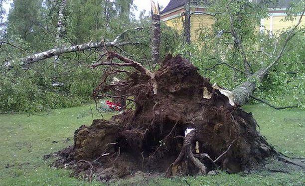 Myrsky kaatoi puita Kaustisen hautausmaalla.