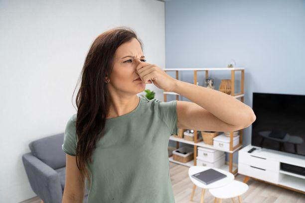 Loman jälkeen kotona voi olla vastassa ikävä lemu, jos viemärin hajulukko on päässyt kuivumaan.