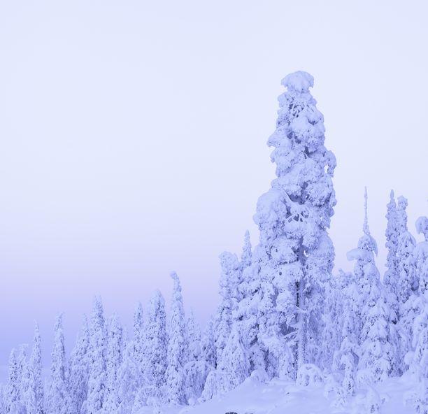 Lukuisat eturivin ykköstähdet ovat lomailleet Lapissa tänä talvena.