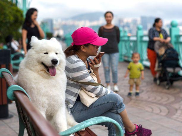 Perheenjäsen. Lemmikkien määrä tiheään asutussa Hongkongissa on noussut samaa tahtia syntyvyyden laskun kanssa.