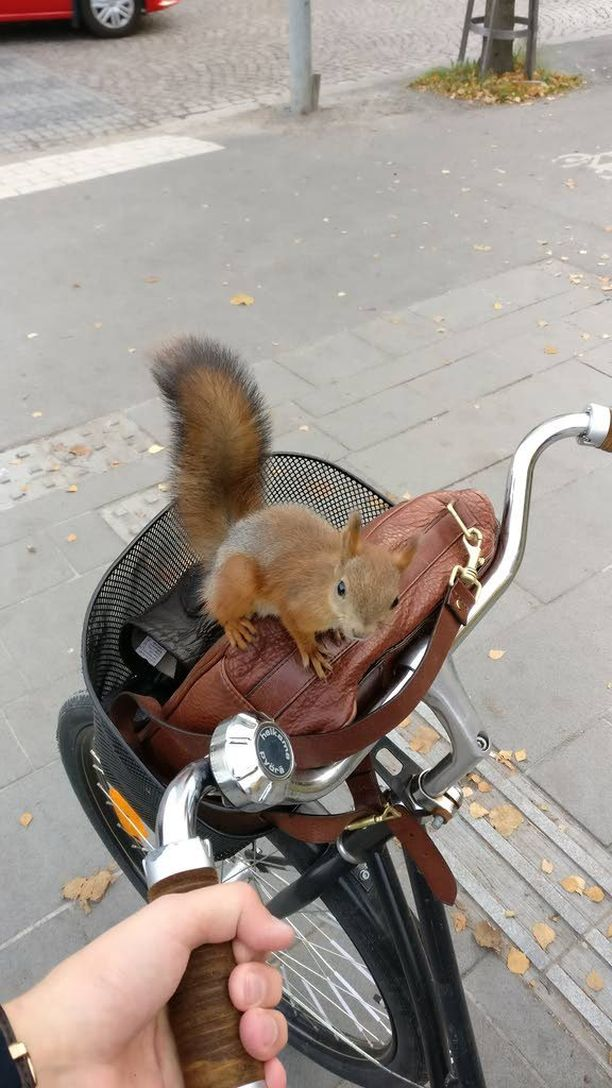 Orava näytti suorastaan poseeraavan kameralle.