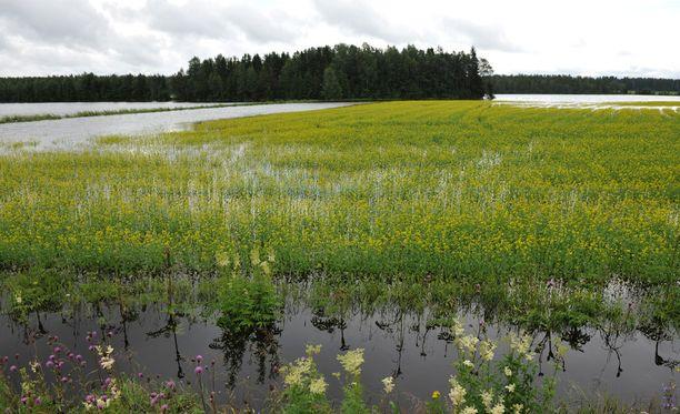 Karvialla tulvi heinäkuussa 2012.