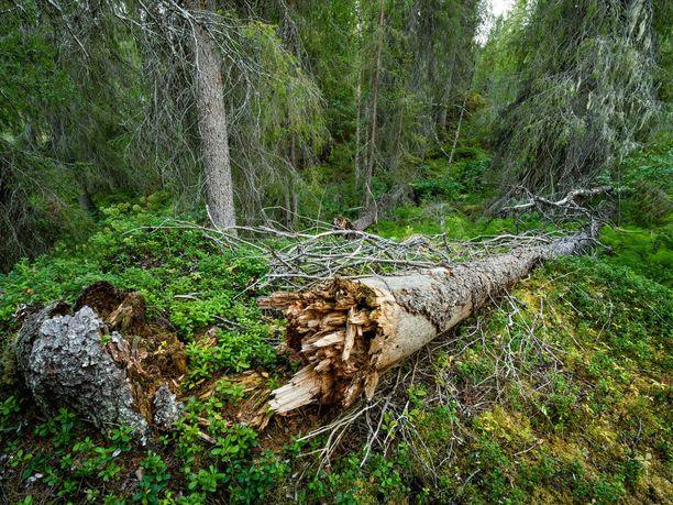 Suomi sitoutuu yli 60 muun maan kanssa suojelemaan luonnon monimuotoisuutta.