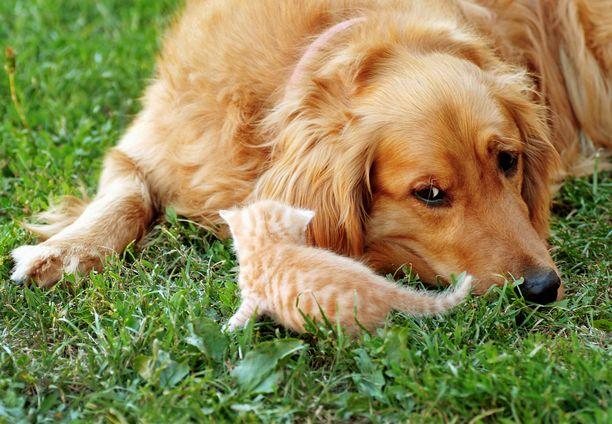 Koirien rekisteröimispakolla halutaan parantaa koirien hyvinvointia.