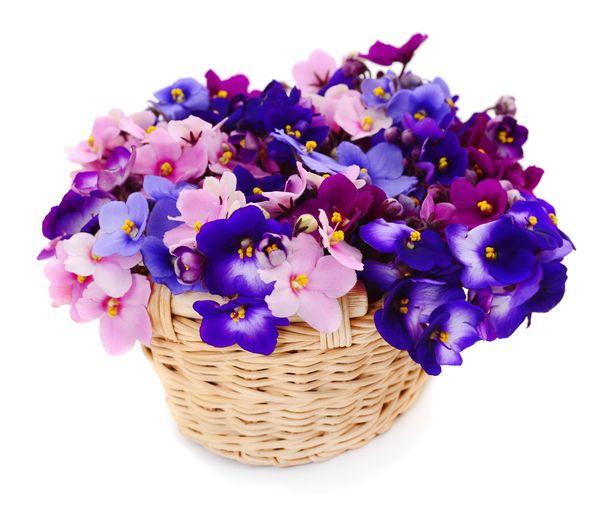 Vaativan violetin ostoa kannattaa miettiä kaksi kertaa.