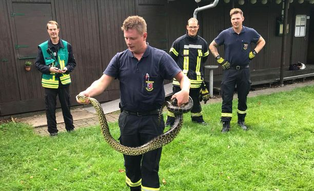 Tarkemmissa mittauksissa käärmeen pituudeksi saatiin noin 2,5 metriä.