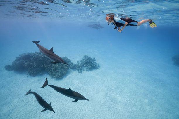 Punaisen meren korallit ja muu merellinen elämä houkuttelevat sukeltajia.