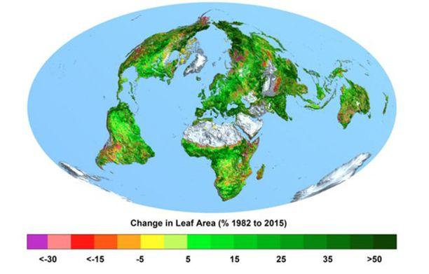 Satelliittihavaintojen perusteella näkyy selvästi, että maapallon vihreys on viime vuosikymmeninä lisääntynyt.