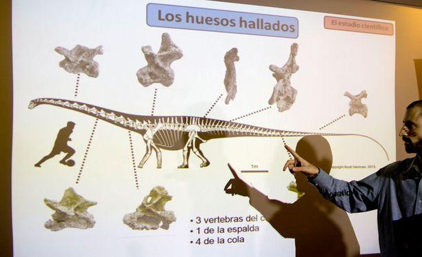 Paleontologi Pablo Gallina esitteli löytöä Buenos Airesissa Argentiinassa.