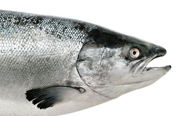 Kalat tainnutetaan vastaisuudessa joko sähköllä tai iskulla päähän.