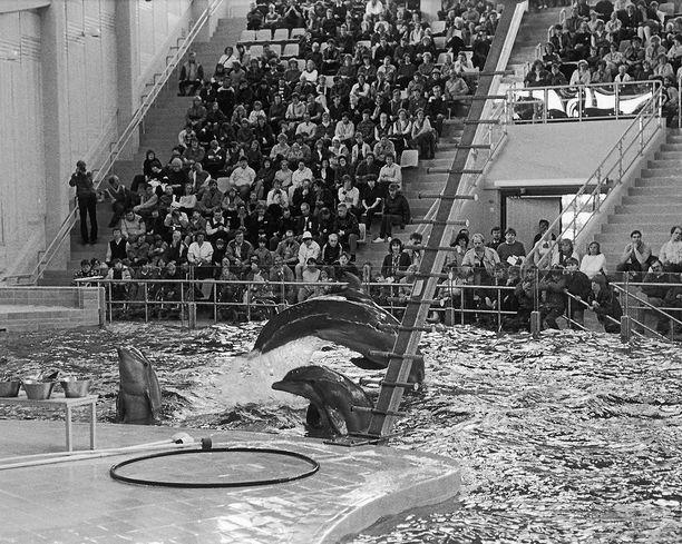 Delfiinien esitys 1980-luvulla.