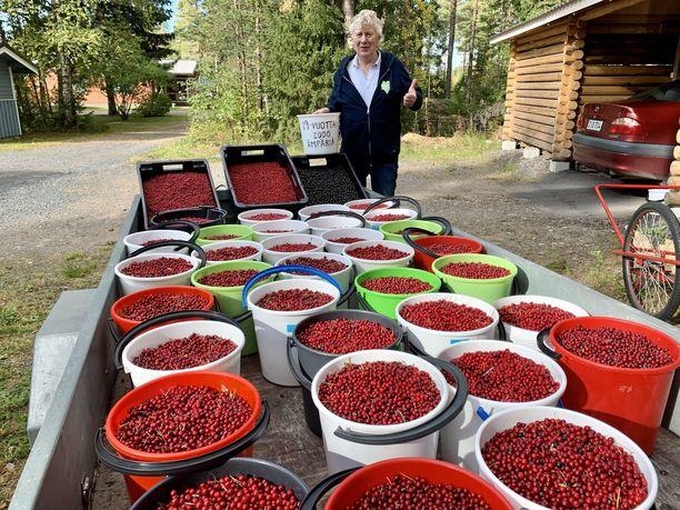 Aimo Karppinen on toimittanut Raahen alueella vanhainkoteihin satoja litroja marjaa, jotta ikäihmisille olisi tarjolla luonnon omia vitamiineja.